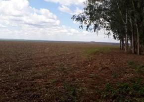 ÁREA RURAL - VENDA - PLANTIO DE SOJA, ALGODÃO E MILHO